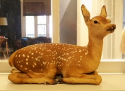 """Bambi"" - Vintage taxidermy"